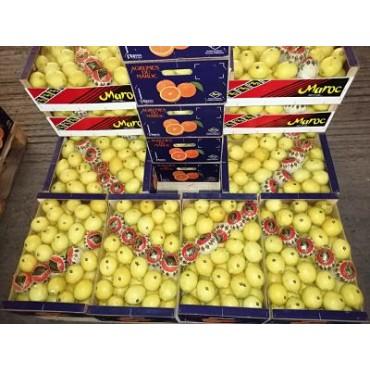 exportateur citron Maroc