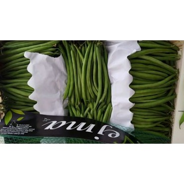 exportateurs Maroc haricot filet