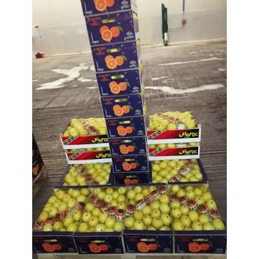 Maroc export citron