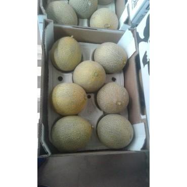 exportateurs Melon