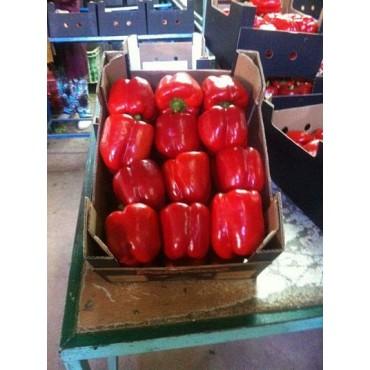 fournisseur maroc poivron rouge californie