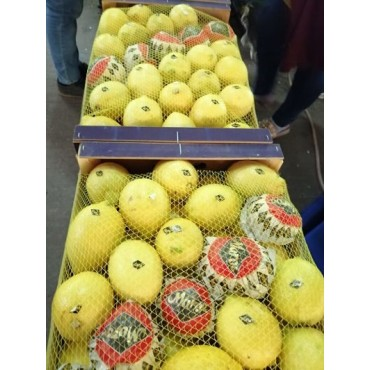 impoter citron Maroc