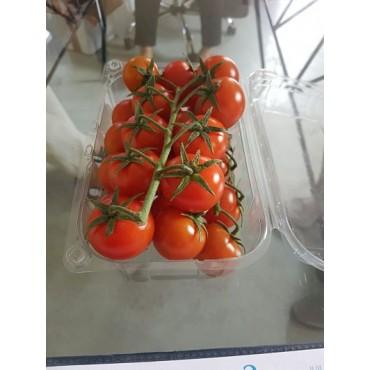 Exportateur tomate cerise