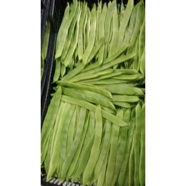 Haricot vert Maroc export