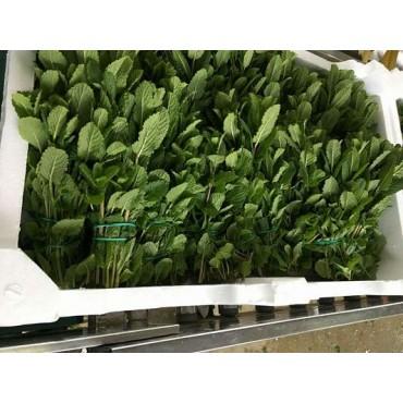 Import menthe Maroc