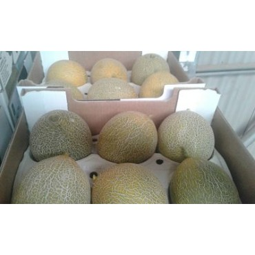 Import melon