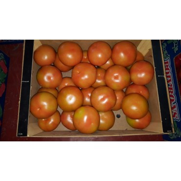 Maroc tomate export