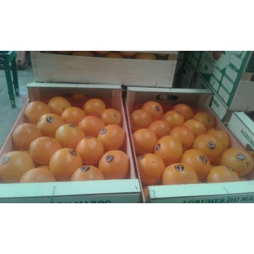 Exportateur orange valencia Maroc