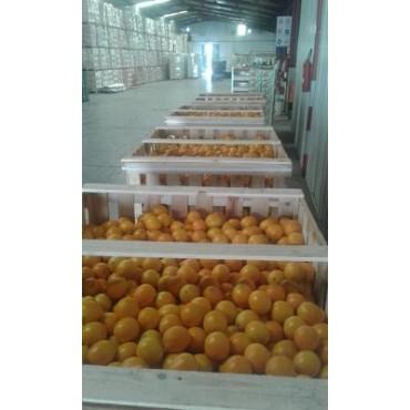 orange valencia Maroc