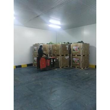 Maroc exportateurs pastèque