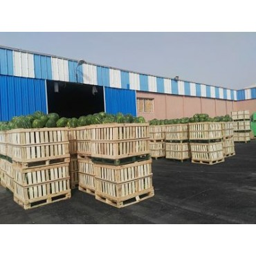 Stockage export pastèque