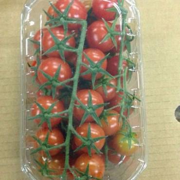 Maroc tomate cerise export