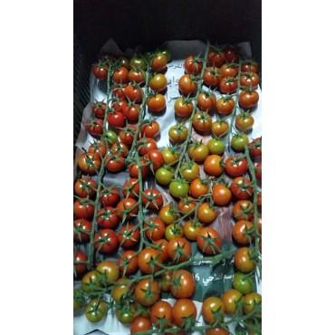 Import tomates cerises Maroc