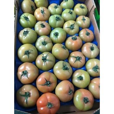 tomate export Maroc Europe