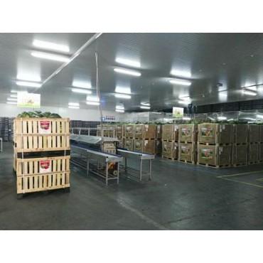 Grossistes export pastèque Maroc