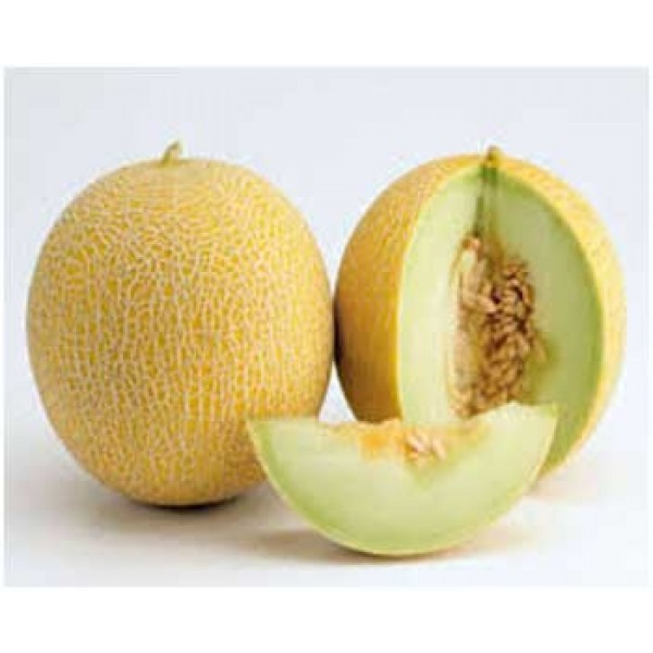 Melon Galia Maroc Mondial Export