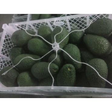 Avocat hass export