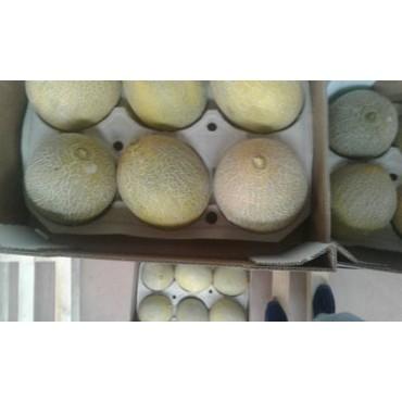 Melon Maroc