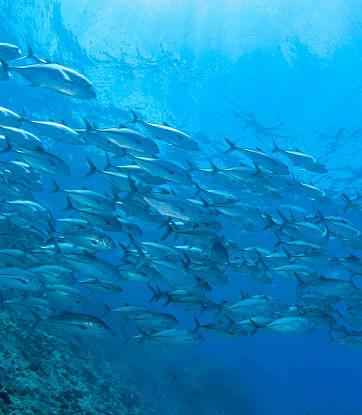 المغرب منتجات البحر