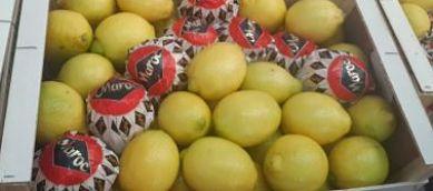 Export exportateur citrons maroc