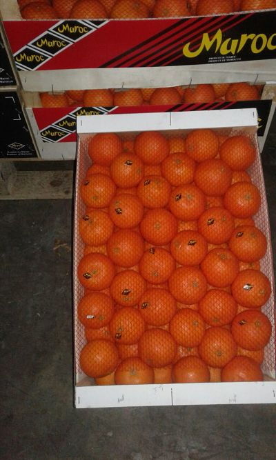 Morocco Clementine export