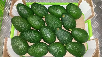 Avocat export Maroc