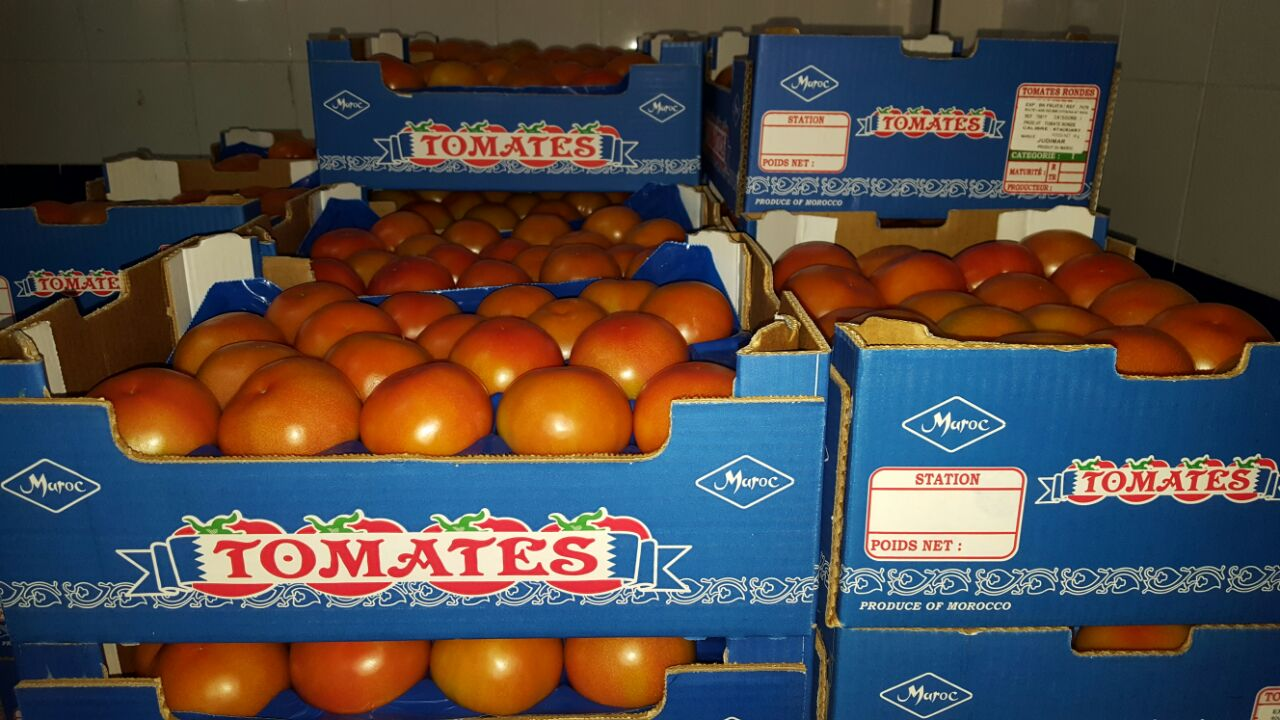 Importer tomate du Maroc