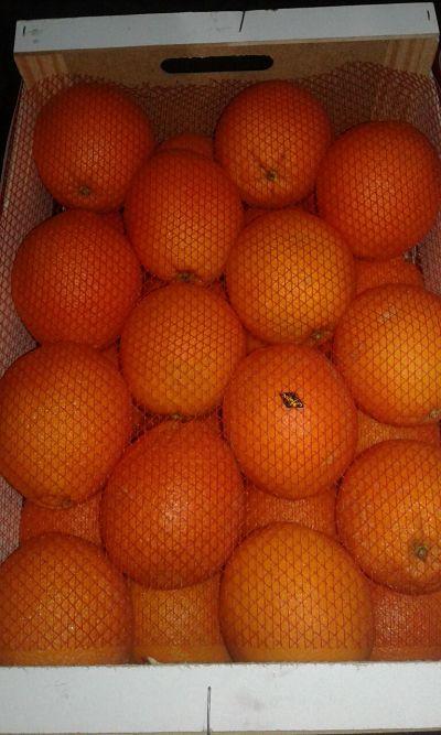 Morocco Oranges Navel