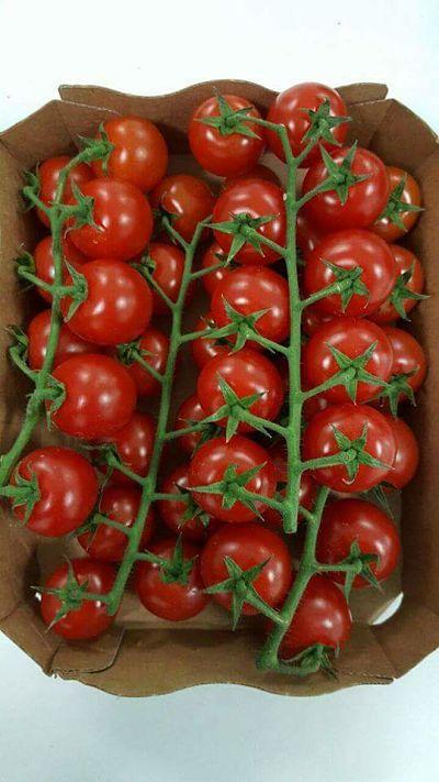 tomate cerise export
