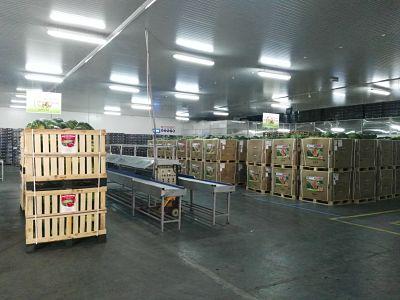 Pastèque Maroc export