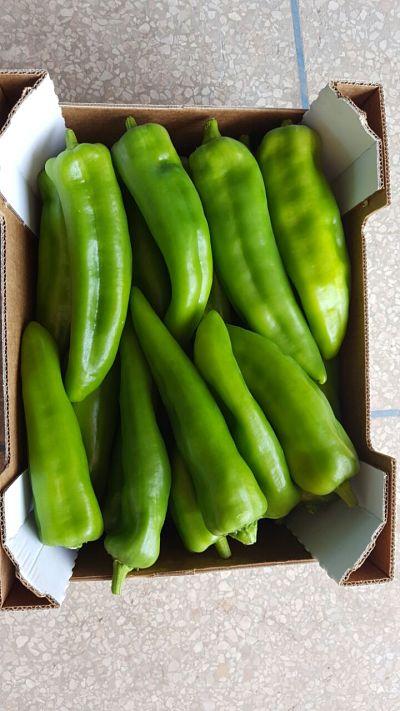 Maroc export poivron vert