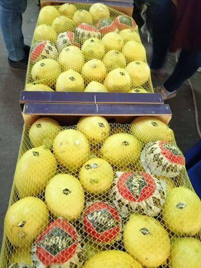 Maroc Mondial Export citron