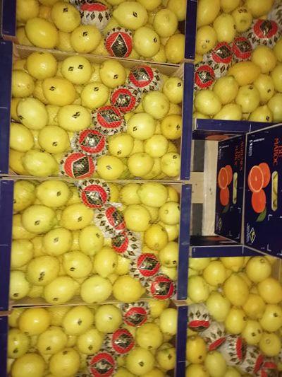 citron maroc export