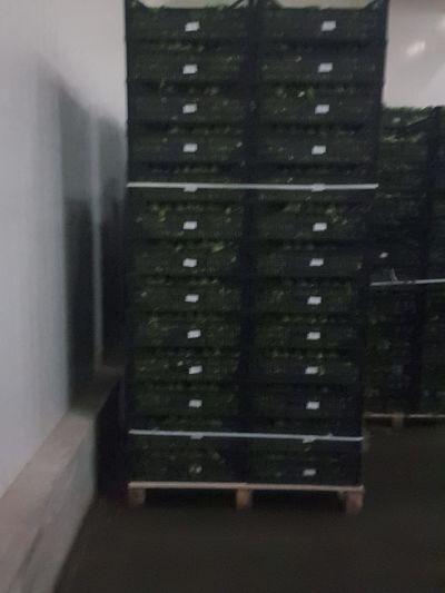 Maroc export Persil