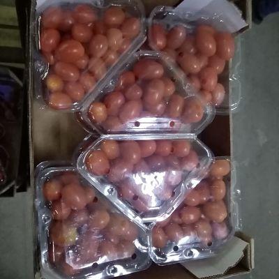 Exportateur tomate cerise Maroc