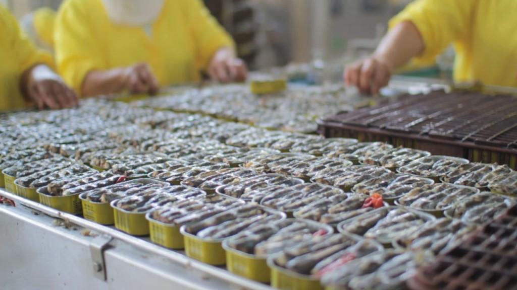 Maroc export conserve sardine