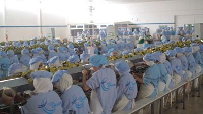 Conserverie exportation conserve sardine