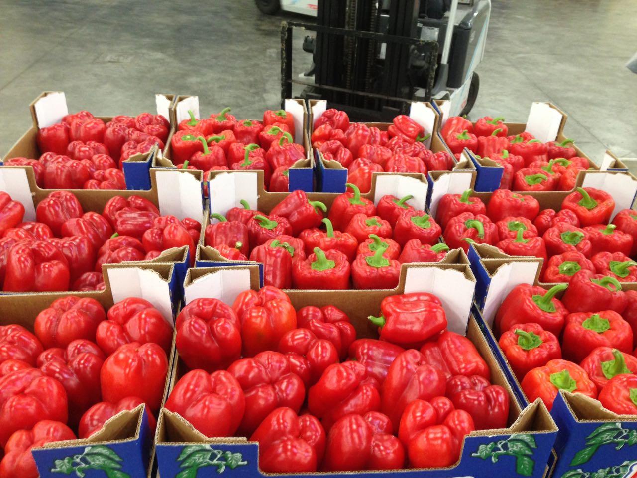 Export poivron rouge